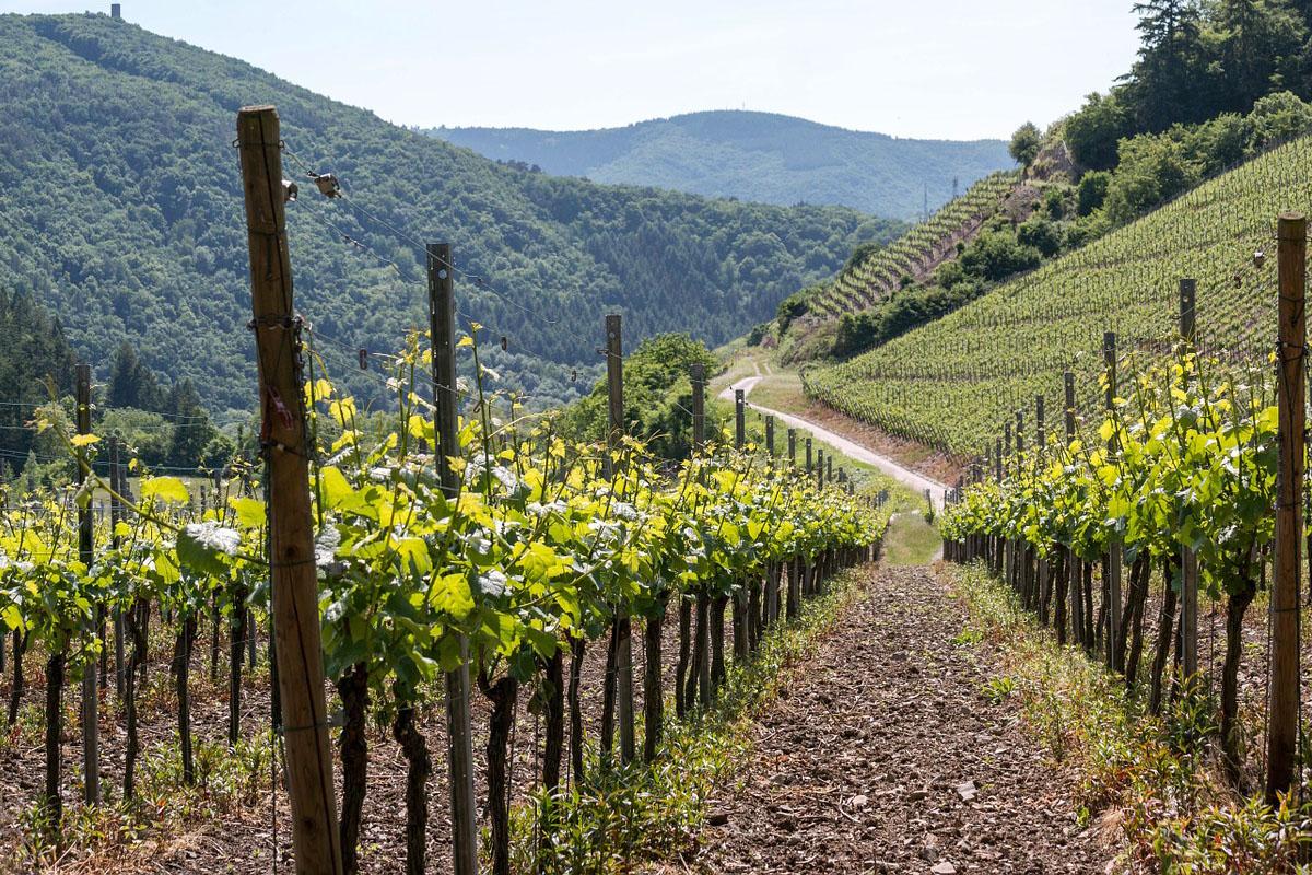 Bild eines Weingutes in Deutschland