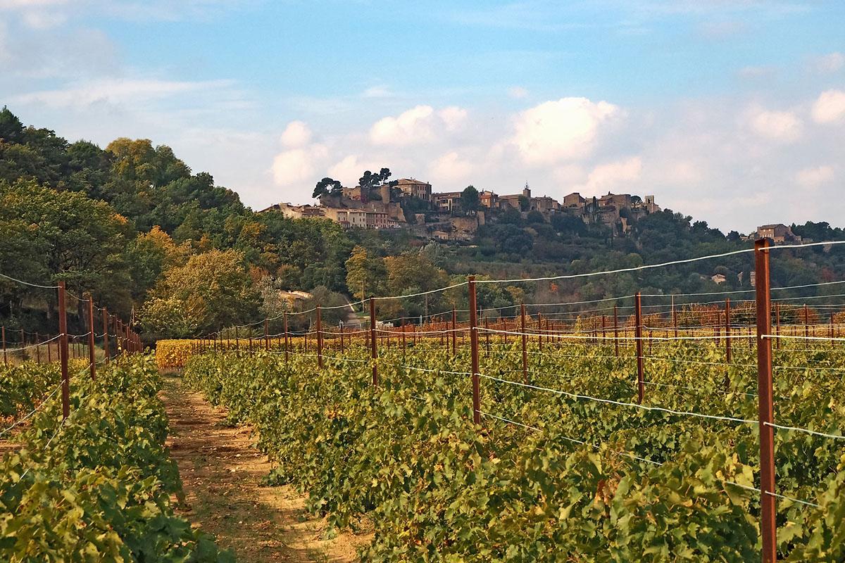 Bild eines Weingutes in Frankreich
