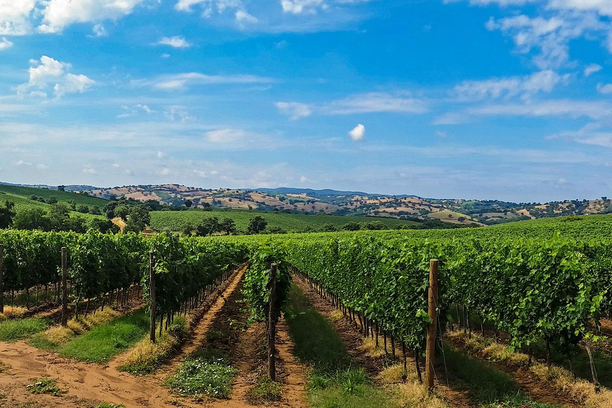 Bild eines Weingutes in Italien