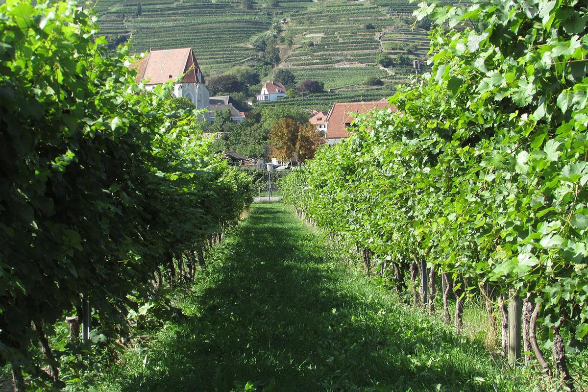 Bild eines Weingutes in Österreich